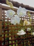 兰花花和木头网 库存照片