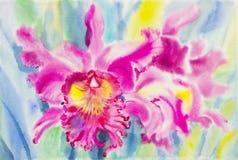 兰花花和绿色叶子的绘的桃红色颜色 免版税库存图片