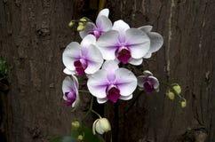 兰花花在亚热带庭院里 库存图片
