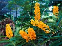 兰花花在庭院里 免版税图库摄影