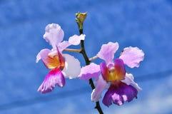 兰花花束 库存图片