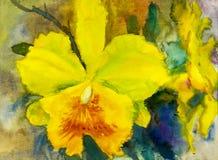 绘兰花花的黄色颜色抽象水彩 免版税图库摄影