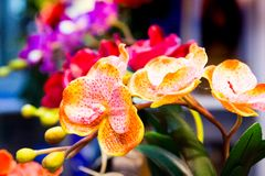 兰花花,五颜六色的兰花 库存照片