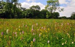 兰花草甸,铸工Hanglands国家级自然保护区 库存图片