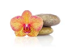 兰花镶边花与湿石头的 免版税库存照片