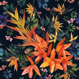 兰花,Strylitzia样式 热带花,开花群无缝的样式 与热带花的美好的背景,植物 库存例证
