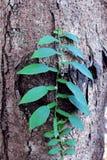兰花离开绿色 雨林密林种植自然植物群 免版税库存图片