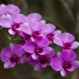 兰花紫罗兰色美丽的花束 库存图片