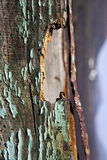 兰萨罗特岛抽象绿色棕色窗口天空山hil 库存图片