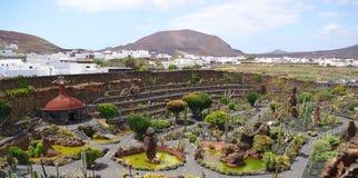兰萨罗特岛海岛的美丽的仙人掌公园 免版税库存照片