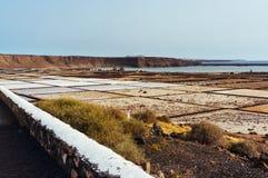 兰萨罗特岛盐沼  库存图片