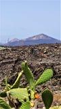 兰萨罗特岛,火山的石风景丝毫仙人掌 库存图片
