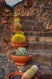 兰萨罗特岛, Jardin de Cactus,在罐的仙人掌在石台阶 免版税库存图片