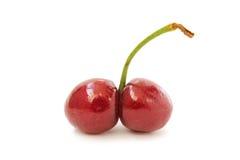 共同生长的樱桃 免版税库存照片