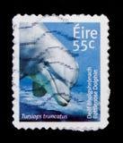 共同的宽吻海豚(Tursiops truncatus),爱尔兰动物和海洋生物(第3个系列) serie,大约2011年 免版税库存照片