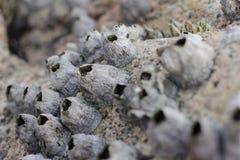 共同的岩石眼镜 库存照片