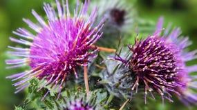 共同的植物名 免版税库存照片