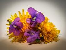共同的蓝色紫罗兰和蒲公英花 库存照片