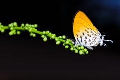 共同的诗句蝴蝶吮食物 库存照片