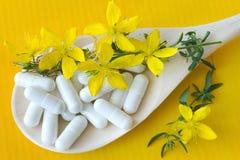 共同的贯叶连翘-金丝桃属植物perforatum -抗抑郁剂 免版税图库摄影
