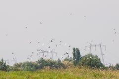 共存:飞行的鸟和电源杆群  免版税库存图片