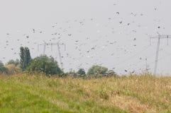 共存:飞行的鸟和电源杆群  免版税库存照片