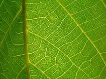 关于叶子的宏观照片 库存照片