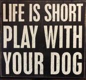 关于生活和狗的技巧 免版税库存照片