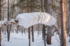 关于豪华的树 在树雪,冬天寒冷 免版税库存照片