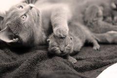 关心宠物兽医 免版税图库摄影