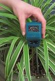 关心室内植物 免版税库存照片