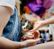 关心对宠物儿童` s手爱抚小平纹小猫开会 免版税库存照片