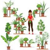 关心对室内植物 皇族释放例证