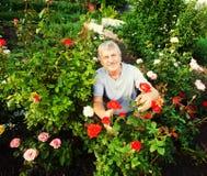 关心对玫瑰的成熟人在庭院里 图库摄影