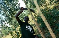 关心志愿研究一个农业项目,卢旺达 免版税库存照片