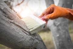 关心树在冬天以后 免版税图库摄影
