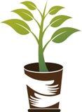 关心植物商标 免版税库存照片