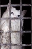 关进笼子猫迷路者 免版税库存图片
