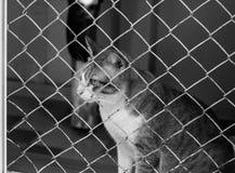 关进笼子猫 库存图片