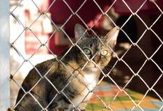 关进笼子猫 免版税库存照片