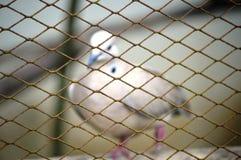 关进笼子鹦鹉 免版税库存图片