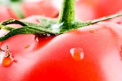关闭一个红色成熟蕃茄的宏观图象在一个绿色藤的 免版税库存图片