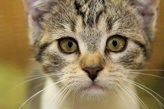 关闭一只可爱的小猫 免版税图库摄影