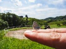 关闭一只小蝴蝶坐妇女手 免版税库存图片
