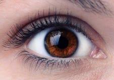 关闭一只棕色妇女眼睛 库存照片