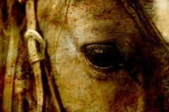 关闭一只棕色马眼睛 乌贼属作用 库存图片