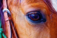 关闭一只棕色马眼睛 图库摄影