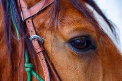 关闭一只棕色马眼睛 免版税库存图片