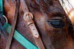 关闭一只棕色马眼睛 库存图片