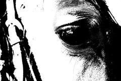 关闭一只棕色马眼睛 库存照片